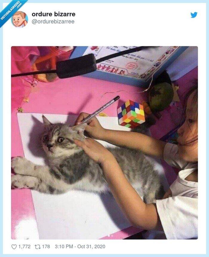 cole,dibujo,gato,mascota