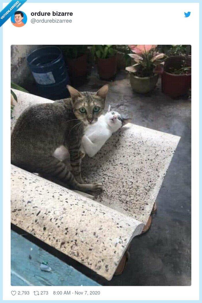 gatos,pillada