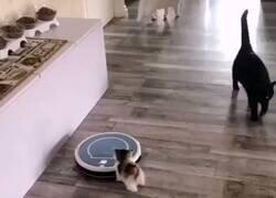 Enlace a Este gatito tiene un parque de atracciones en casa gracias al robot aspirador, por @GorditosGatitos