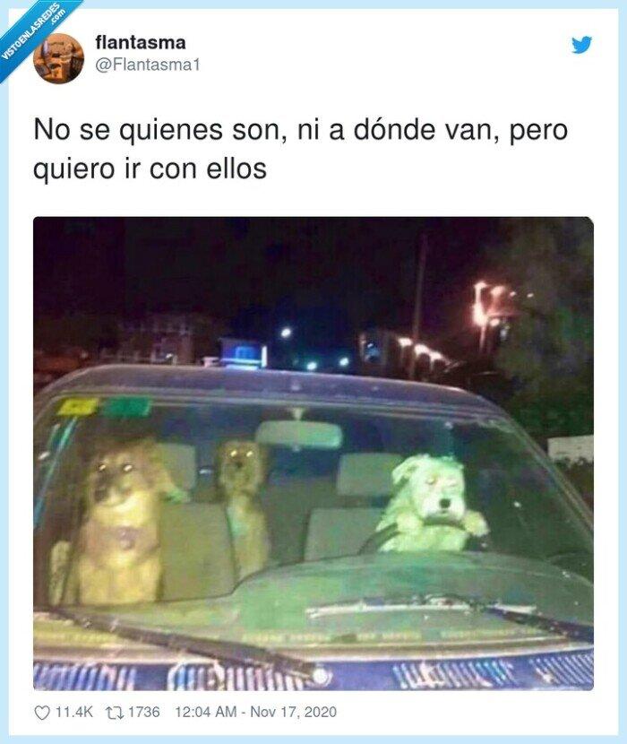 conductores,fiesta,panas,perros