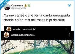 Enlace a Amaia ya se cansó de ser buena onda, por @josecomycota