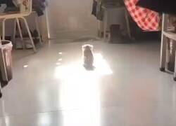 Enlace a Te quiero, gatito que hace la michisintesis, por @GorditosGatitos