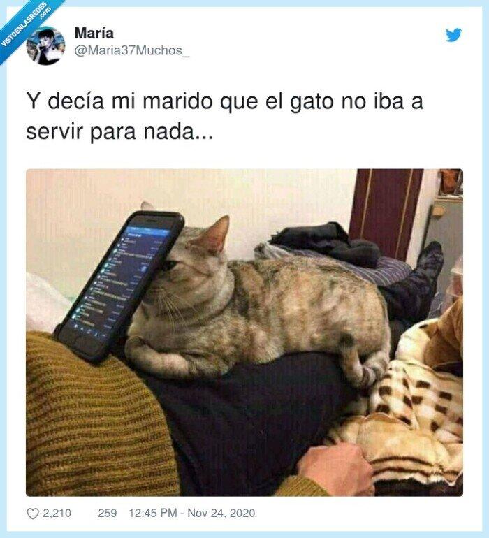 gato,marido,soporte,teléfono