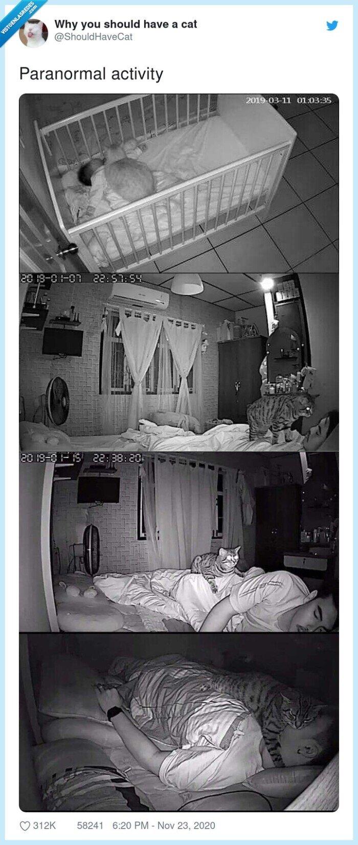 activity,gato,paranormal