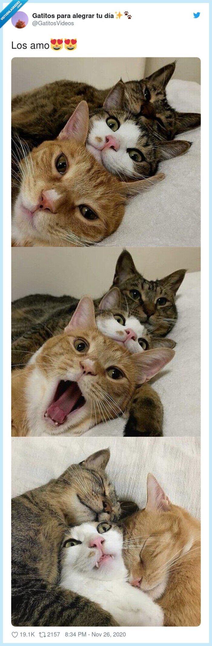 fotos,gatitos,tres