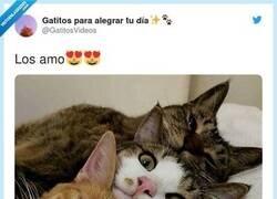 Enlace a Si has tenido un mal día mira las fotos de estos tres gatitos y ya no necesitarás nada más , por @GatitosVideos