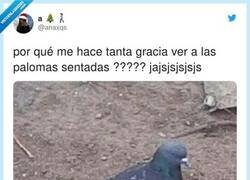 Enlace a Ver palomas sentadas is my new passion, por @anaxqs