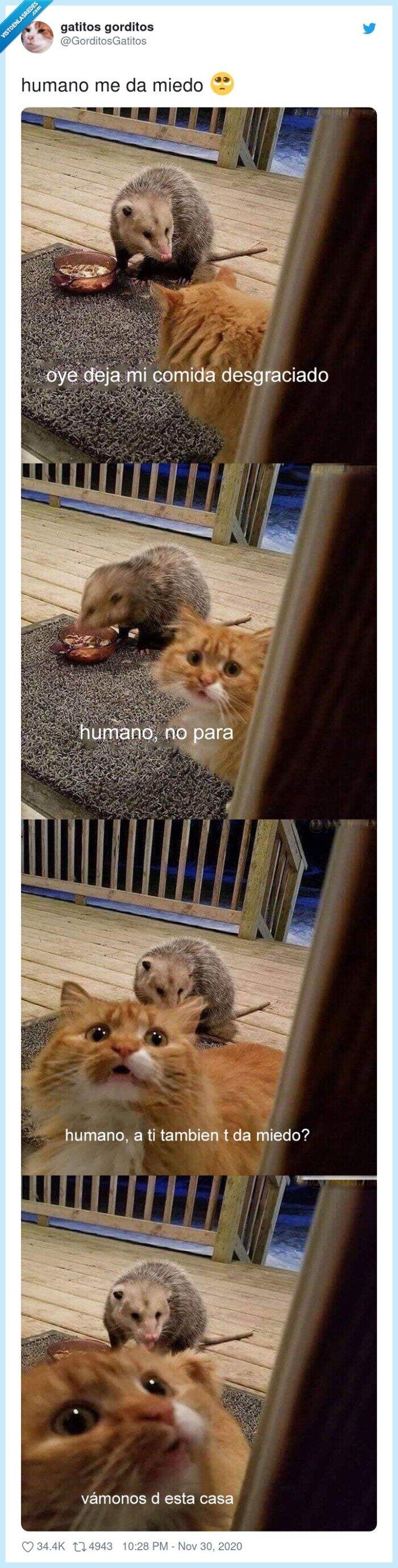 chivato,gato,humano,miedo
