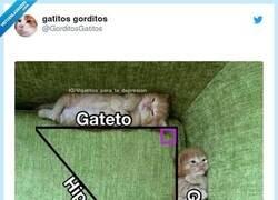 Enlace a Así hubiera sido más fácil todo, por @GorditosGatitos