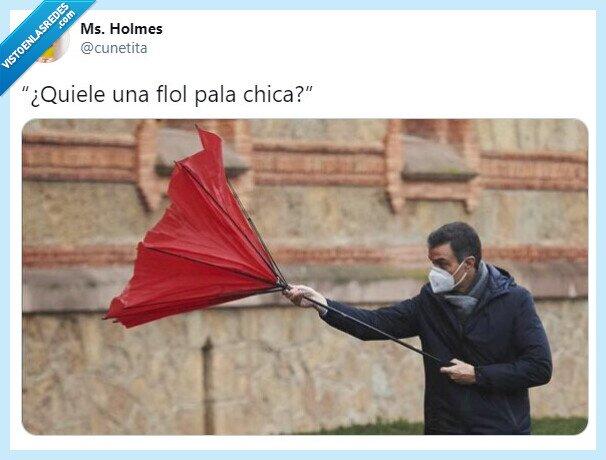 flor,paraguas,Pedro Sánchez,política,twitter
