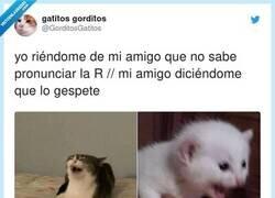 Enlace a JAJAJAJAJAJAJAJA, por @GorditosGatitos