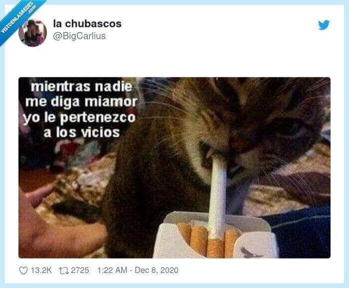 amor,gato,vicios