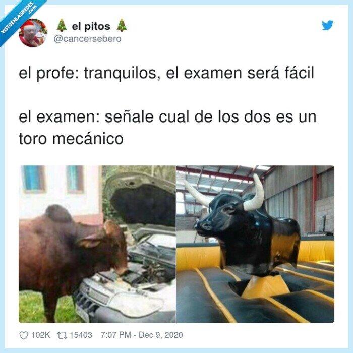 examen,fácil,mecánico,toro