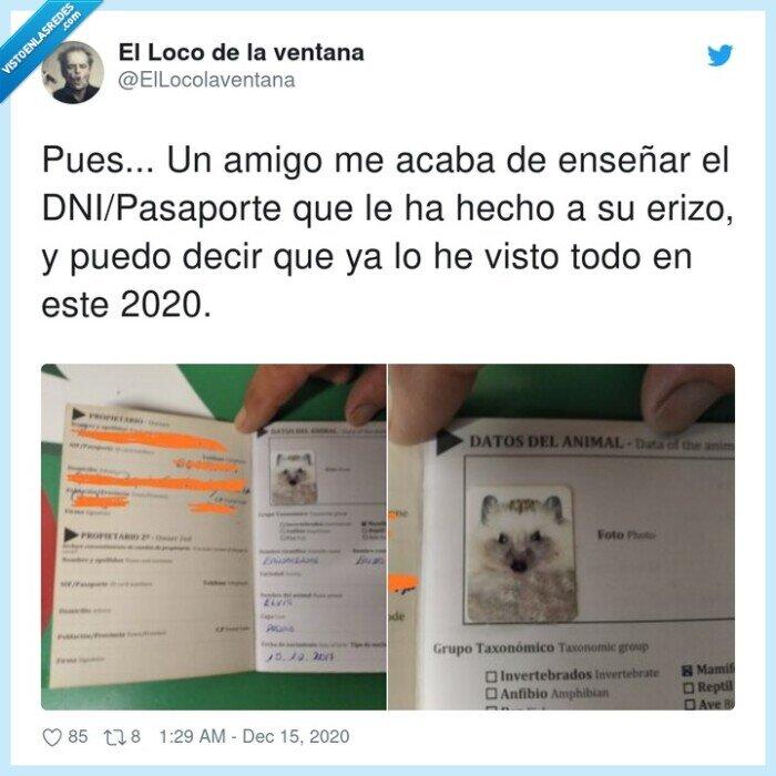 amigo,dni/pasaporte,enseñar,erizo