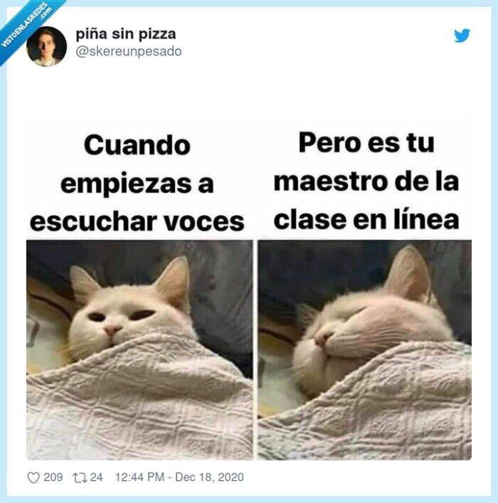 clases online,dormir,gato