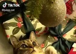 Enlace a Quiero que alguien me mire como este gato a la bolita de navidad, por @GorditosGatitos