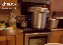Enlace a A nadie le mola cortar cebolla, por @GorditosGatitos