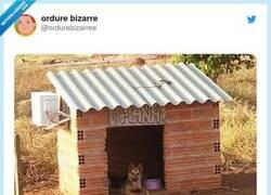 Enlace a Perros más acomodados que yo, por @ordurebizarree