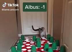 Enlace a Necesito más gatos para hacer esto, por @GorditosGatitos