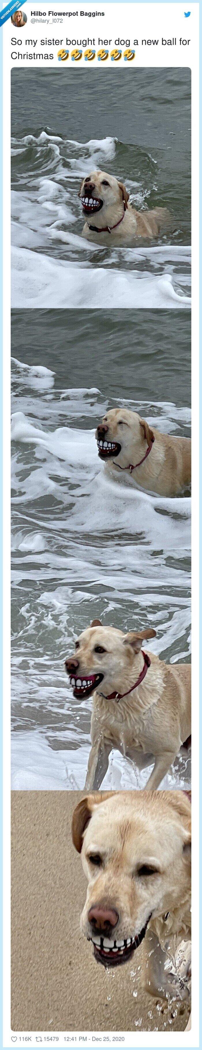 dentadura,pelota,perro,regalo
