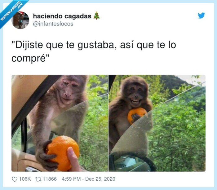 alegría,mono,naranja
