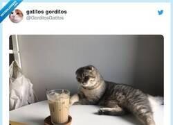 Enlace a En su mirada ya se veía venir, por @GorditosGatitos
