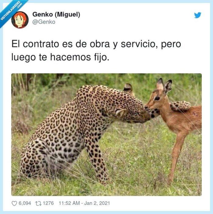 ciervo,contrato,gacela,guepardo,servicio