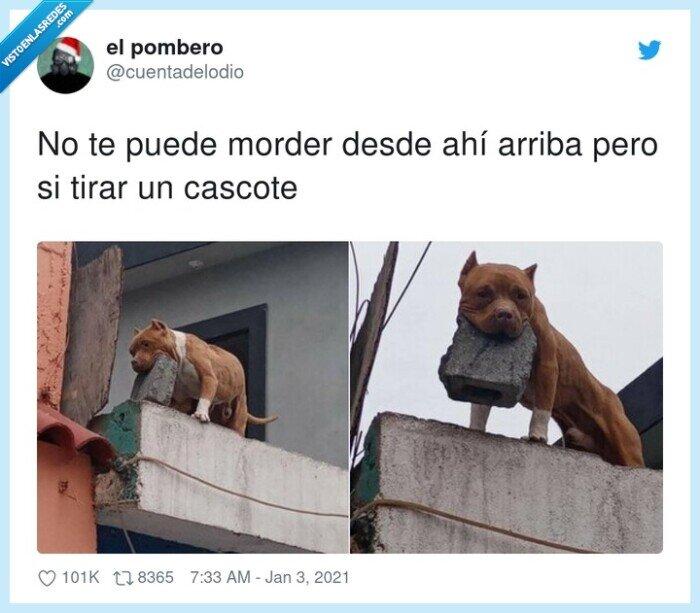 arriba,cascote,cemento,lanzar,morder,perro,puede,tochos