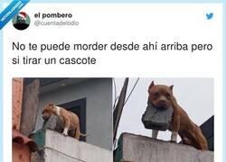 Enlace a La hemos liado si los perros en los balcones empiezan así, por @cuentadelodio