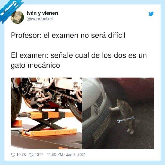 difícil,examen,gato,mecánico,profesor,señalar