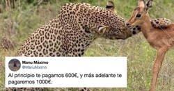 Enlace a Esta foto de un guepardo amenazando a un cervatillo ha desatado una guerra de memes