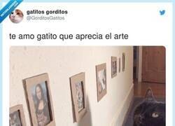 Enlace a Un gato con buen gusto por la cultura, por @GorditosGatitos