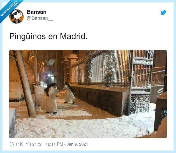 filomena,madrid,monjas,nevada,nieve,pingüinos