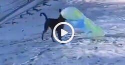 Enlace a El vídeo de lo que hace un perro tras la nevada que lleva 3 millones de reproducciones, por @VetMemories
