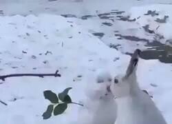 Enlace a Amor entre Olaf y un conejito, por @ConejitosAlDia