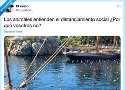 Enlace a Los animales dándonos lecciones, por @El_vasco_