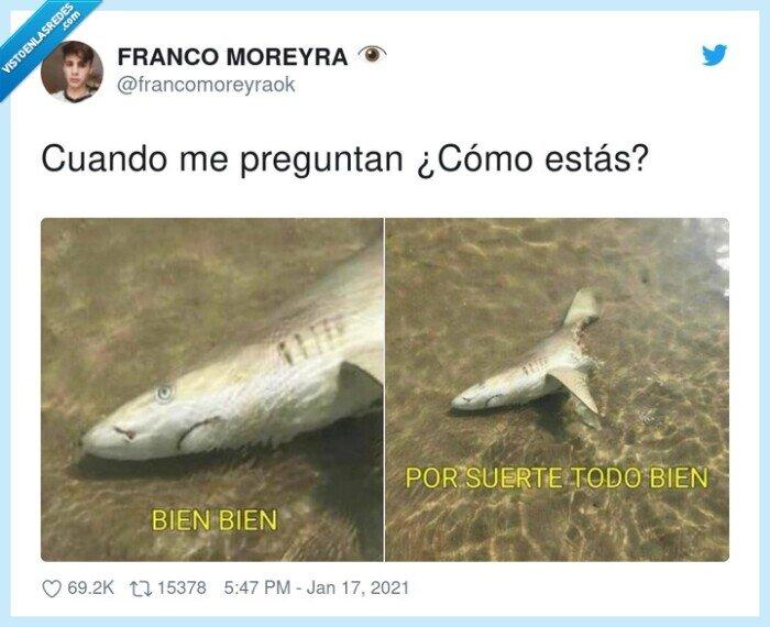 bien,mordido,preguntar,tiburón