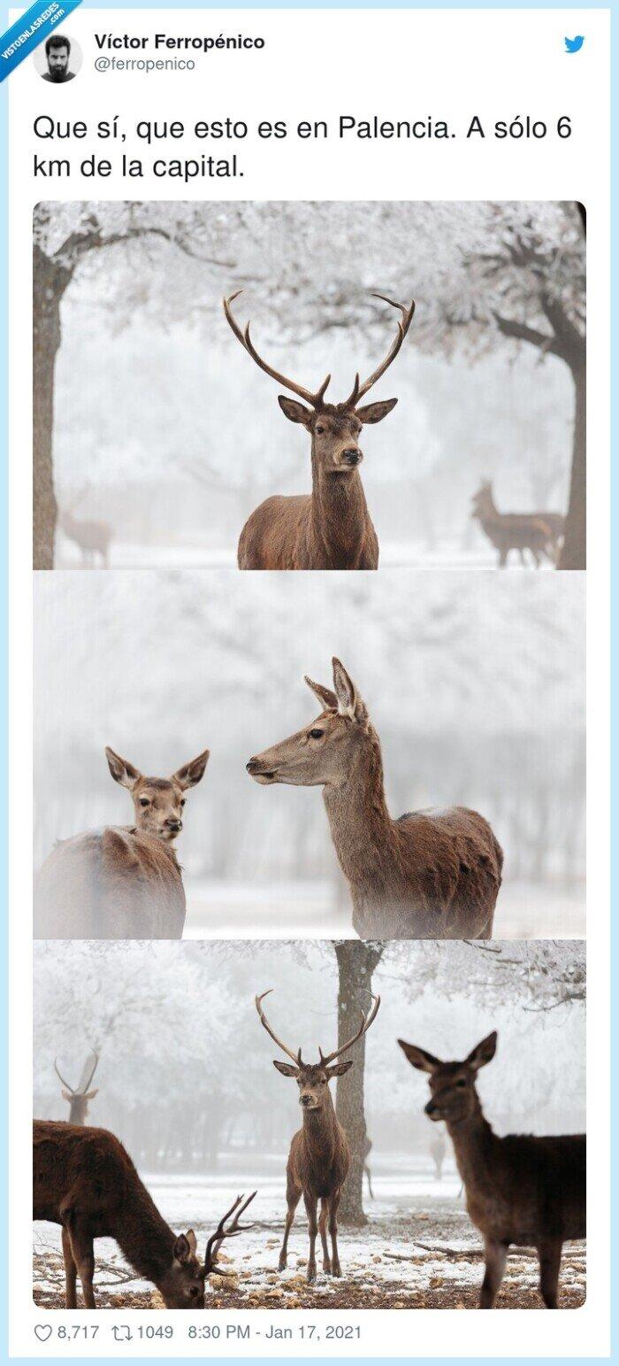 nieve,palencia,renos