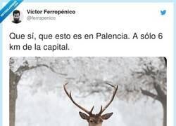 Enlace a Espectacular, por @ferropenico