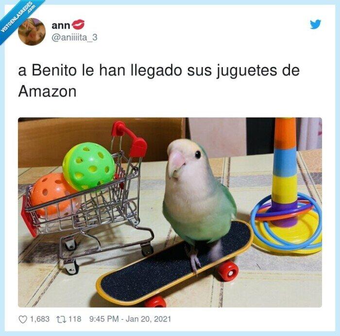 amazon,benito,juguetes,loro