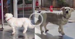 Enlace a Desde que hospitalizaron a su dueño, este perrito va al hospital cada día y hace esto