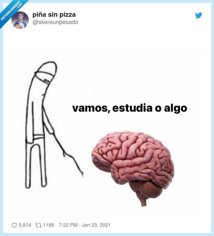 cerebro,estudiar,haz algo