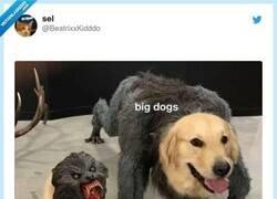 Enlace a Perro ladrador, poco mordedor, por @BeatrixxKidddo