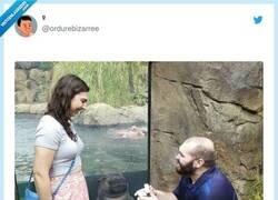 Enlace a La foca está más ilusionada, por @ordurebizarree