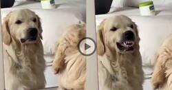 Enlace a Este perro practicando caras delante de un espejo es todo lo que necesitas para alegrarte el día