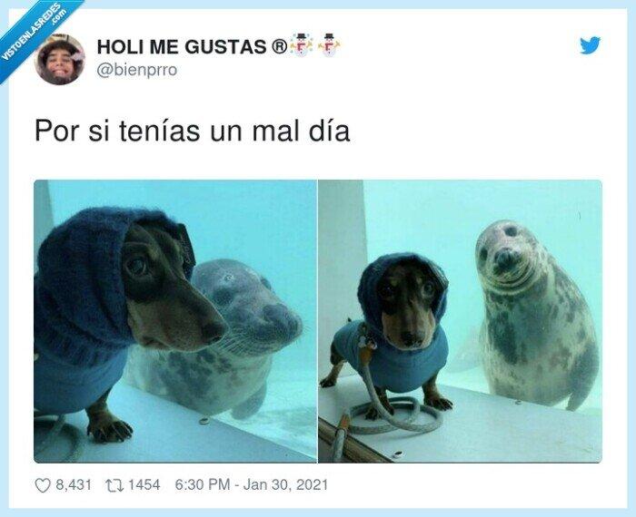 foca,lunes,perro