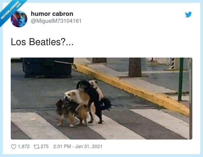 beatles,paso de cebra,perros