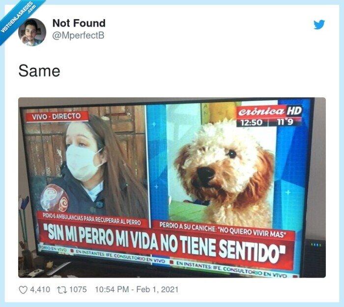mascota,morirse,perro,sin sentido,vida