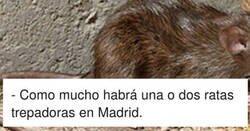 Enlace a Detectan ratas negras trepadoras en Madrid, por @20m