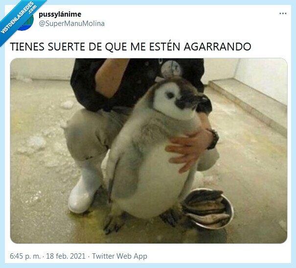 agarrar,pelea,pingüino